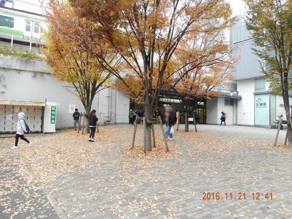 枯れ葉よ〜♪(*´o`)♀~♪